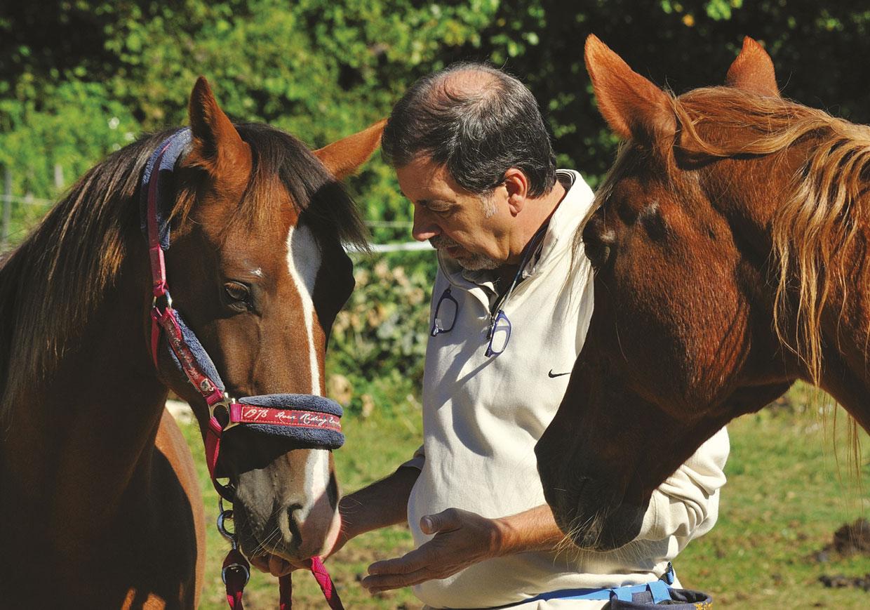 coaching avec les chevaux