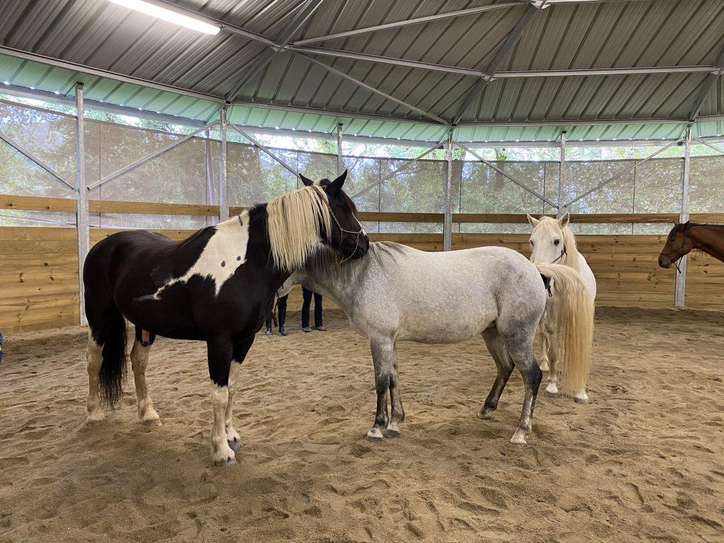 équicoaching et chevaux