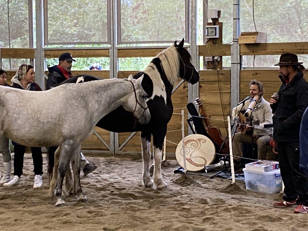 stage de développement personnel aveec la musique et les chevaux